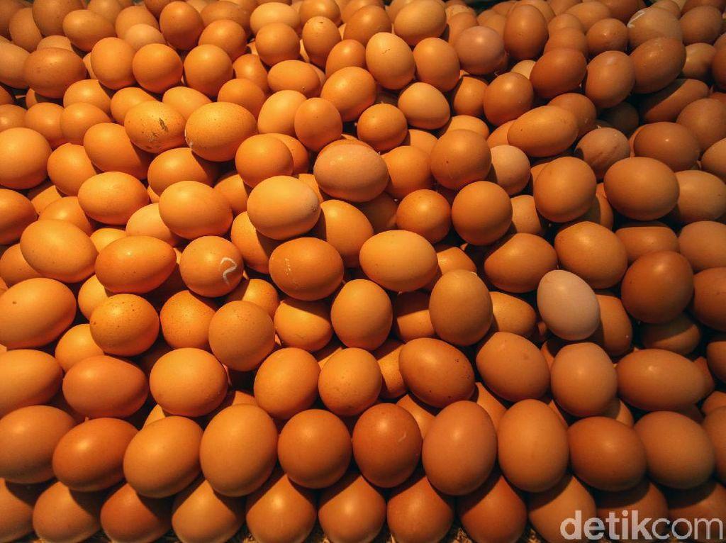BUMN Ini Serap Telur Ayam dari Peternak di Blitar Rp 16.500/Kg