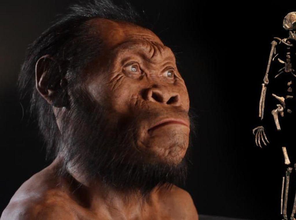 Disebut Punah Karena Malas, Spesies Homo Erectus Punya Pola Makan Beragam