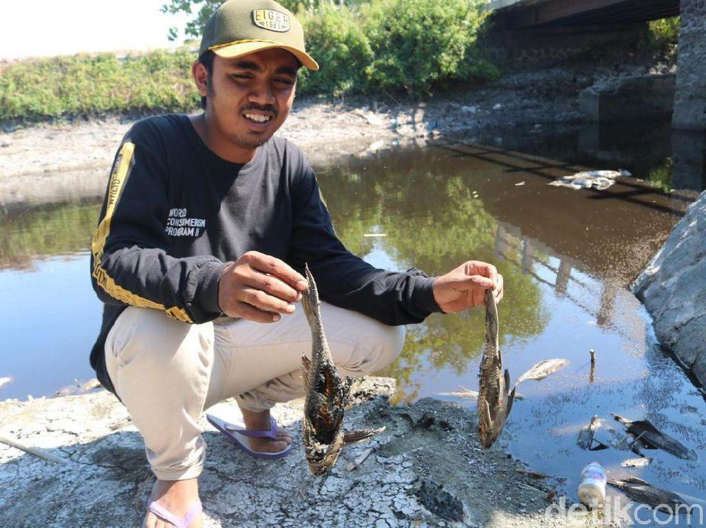 Sungai Avur Budug di Jombang Tercemar Limbah Klorin dan Belerang