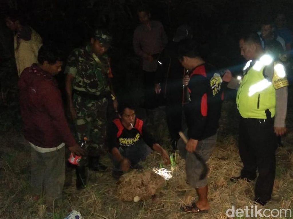 Muntah Setelah Disengat Tawon, Warga Klaten Dirawat Intensif di RS