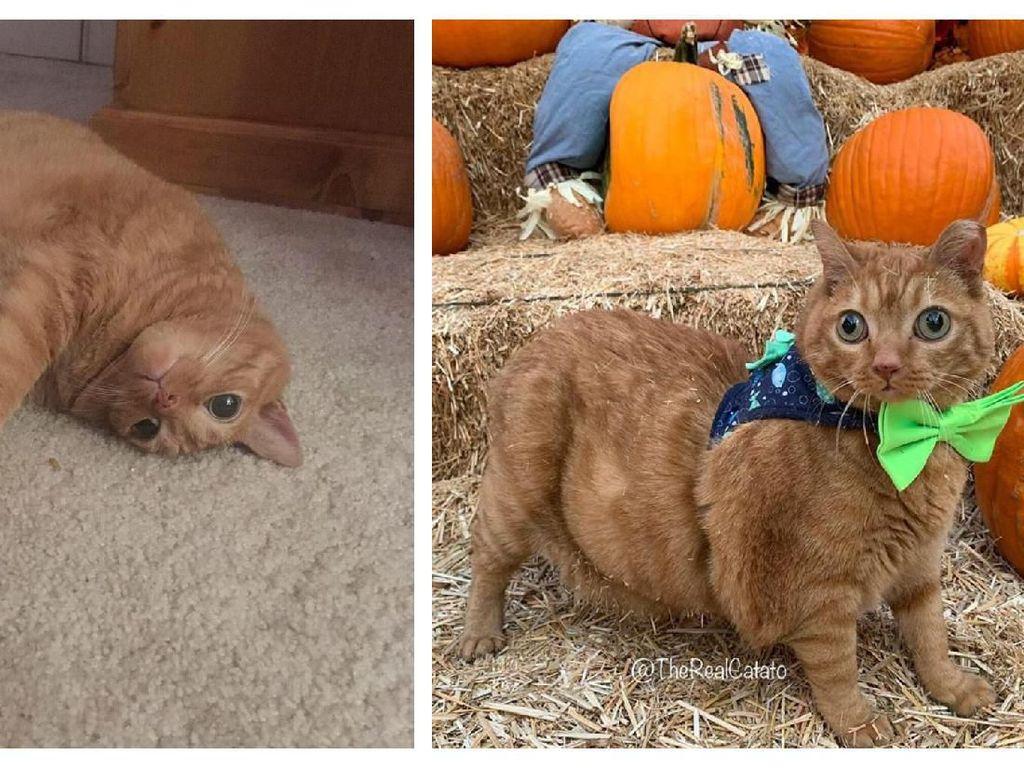 Netizen Gemas Lihat Kucing dengan Mata Googly yang Satu Ini