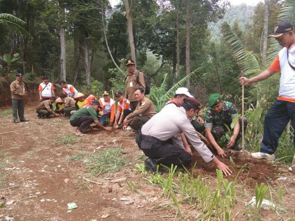 515 Ribu Pohon Ditanam di Hutan Gunung Lawu yang Terbakar