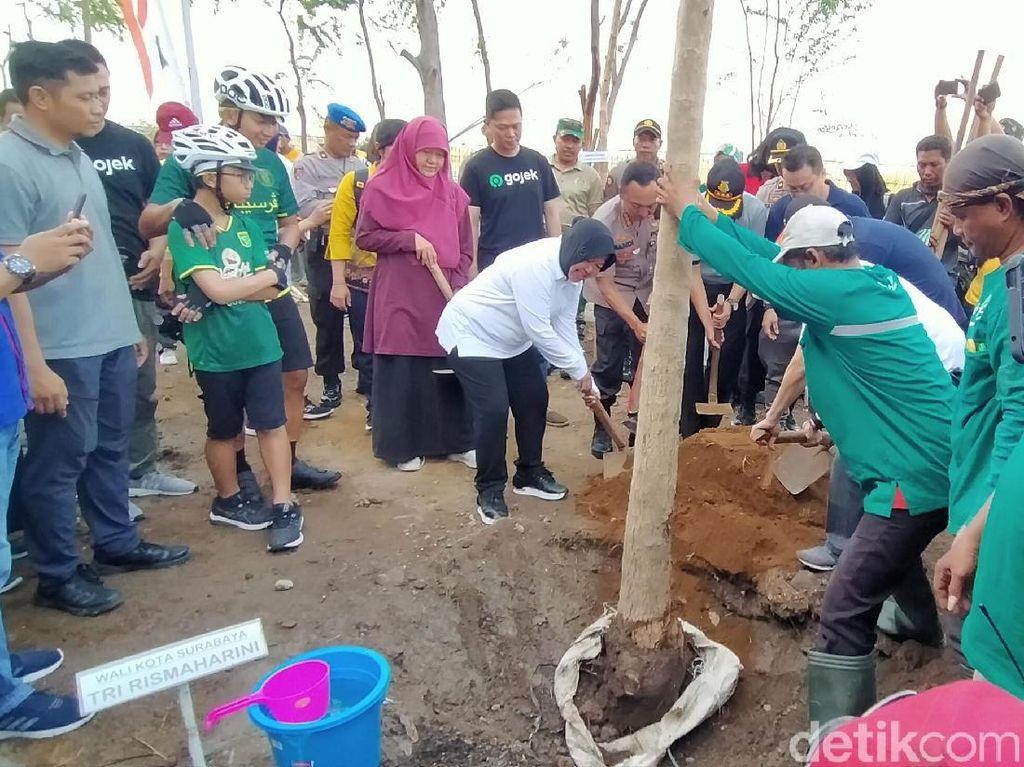 Risma Tanam 1.000 Pohon Tabebuya di Gelora Bung Tomo