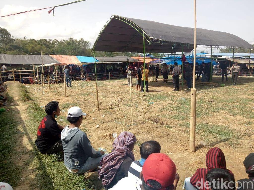 Polisi Gerebek Judi Sabung Ayam Berkedok Pesta Adat Rambusolo di Toraja