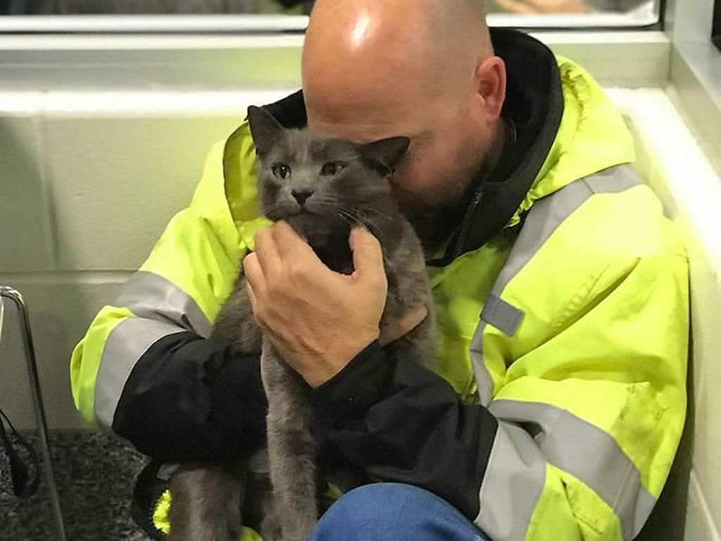 Aneka Foto Mengharukan Bertemu Kucing yang Lama Hilang