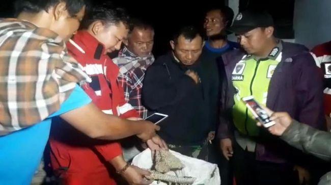 Evakuasi Sarang Tawon Vespa Malam Hari, Ini Alasan Damkar Sukabumi