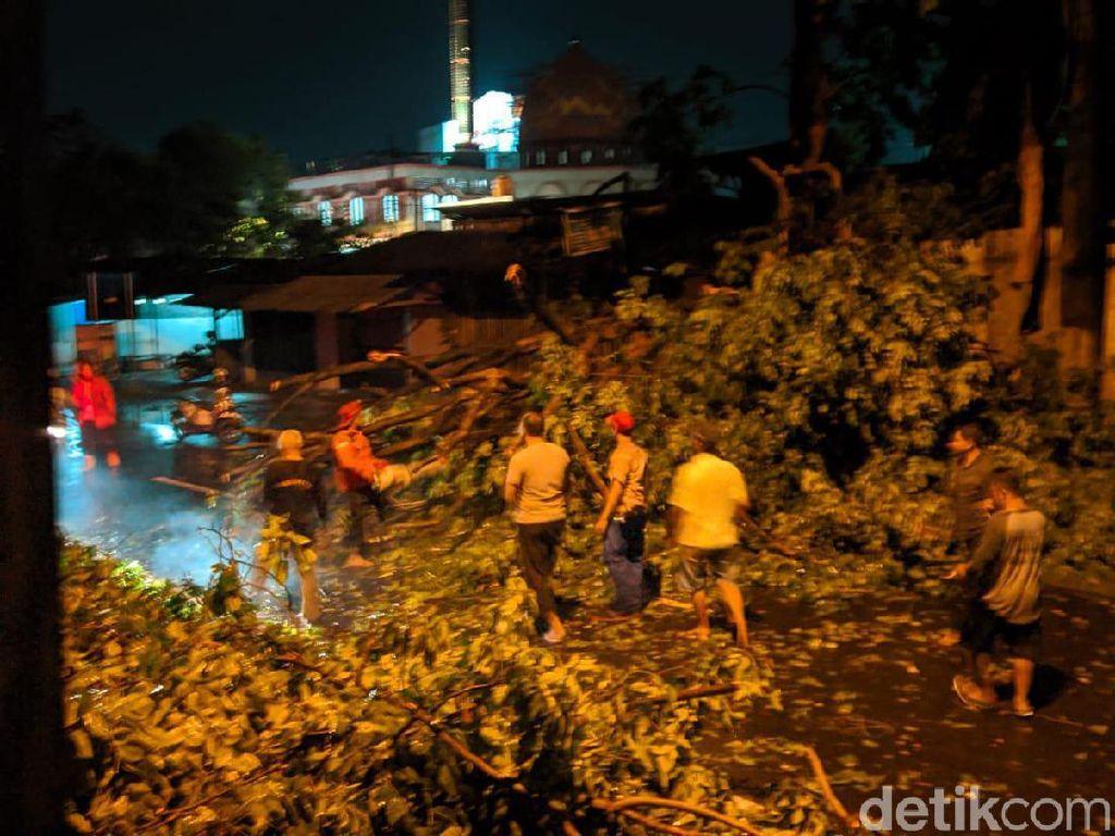2 Bikers Luka Tertimpa Pohon Tumbang Akibat Angin Kencang di Mojokerto