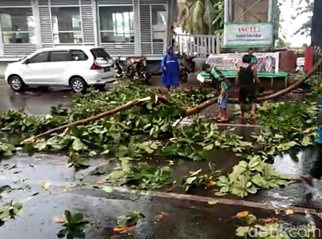 Dahan Pohon Tumbang Depan Pantai Losari Makassar Sempat Bikin Macet
