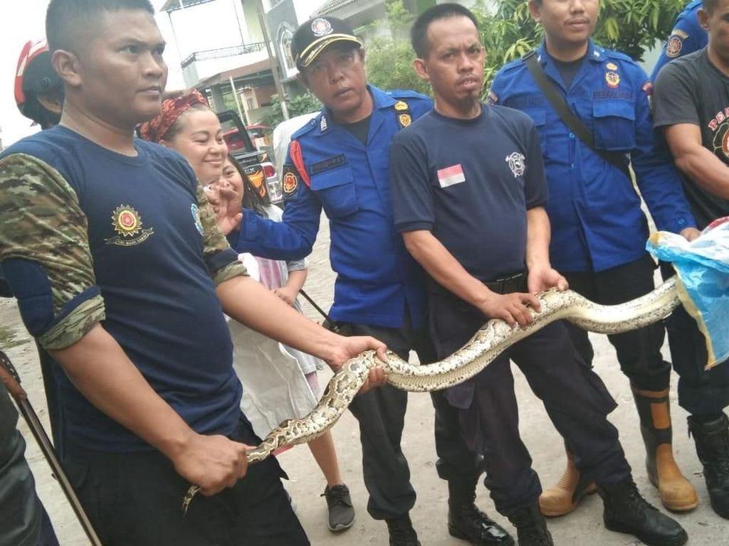 Petugas Damkar Makassar Evakuasi Ular Piton 4 Meter di Rumah Kosong