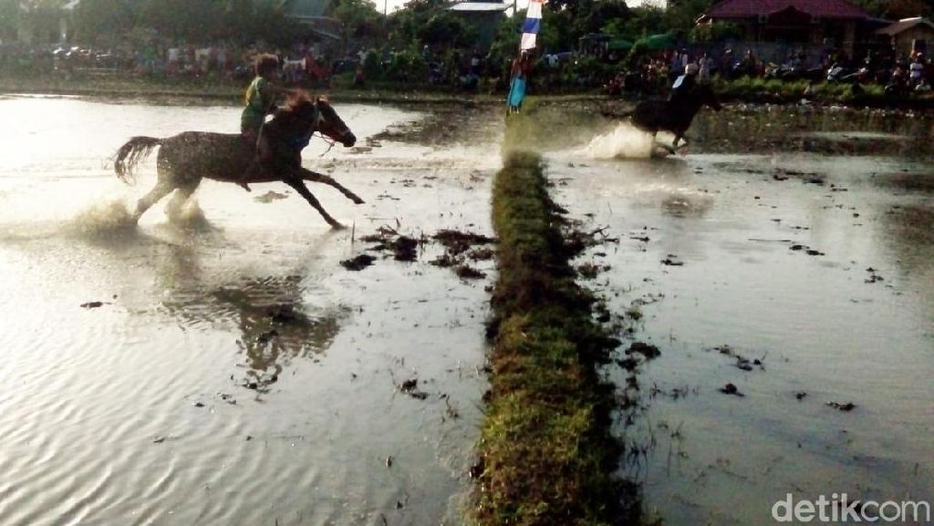Foto: Balapan Kuda Lumpur dan Joki Cilik NTB