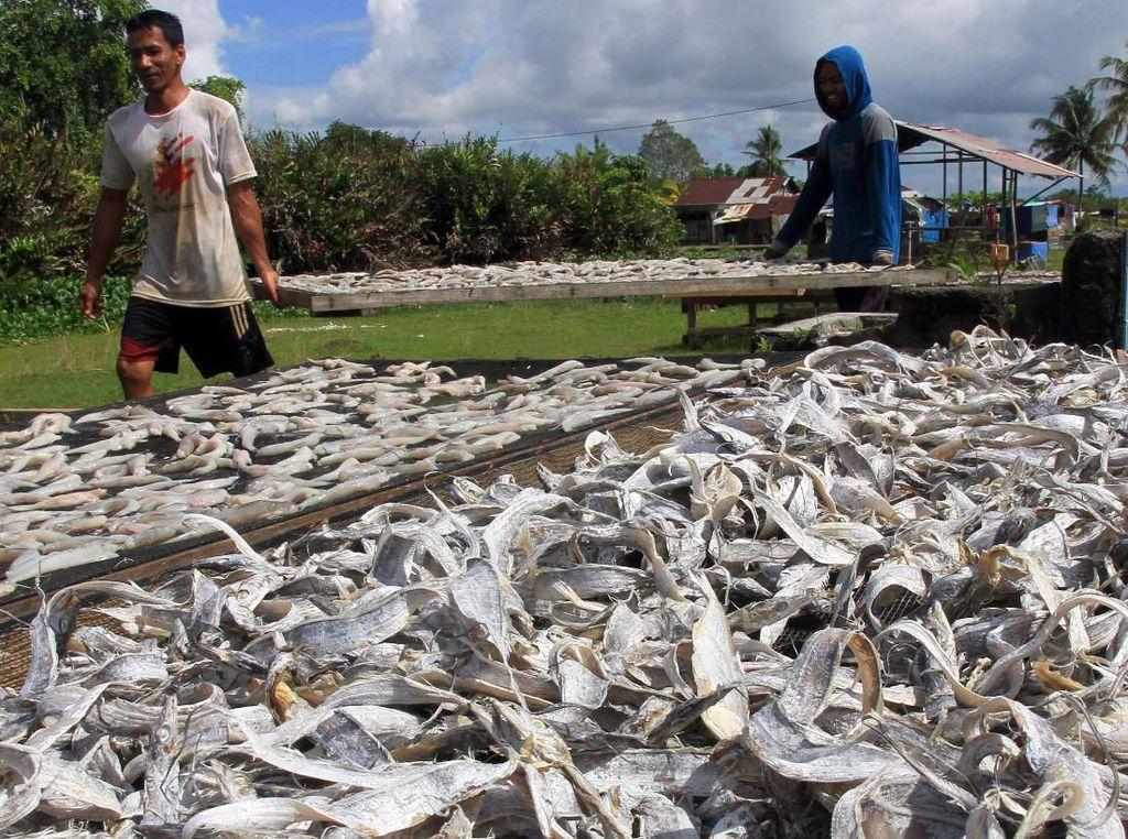 Produksi Ikan Asin di Aceh Barat Meningkat