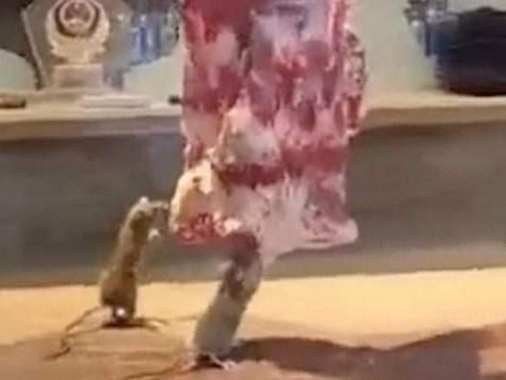 Bikin Mual! Tikus Ini Tertangkap Makan Daging Sapi yang Digantung di Restoran