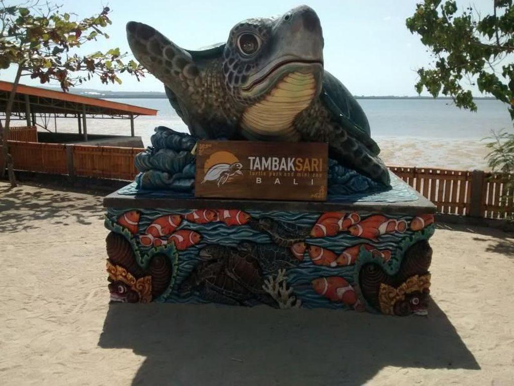 Bali Punya Wisata Konservasi Penyu Loh !