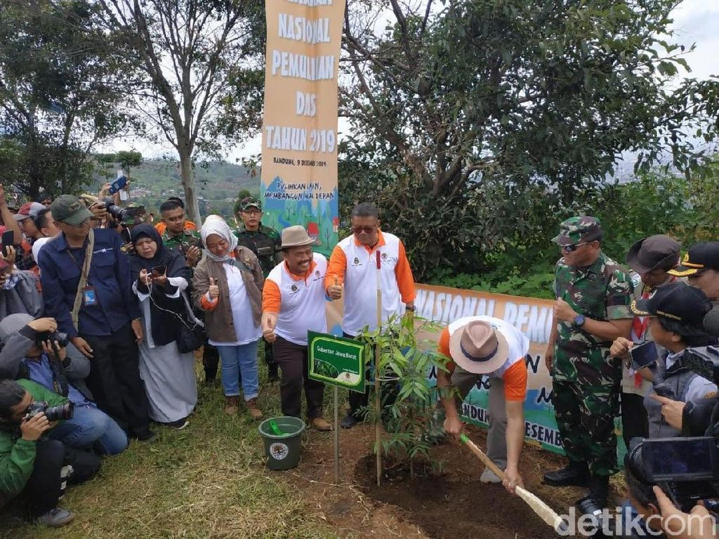 Dewan Dukung Wacana Pasangan Cerai di Jabar Sumbang 100 Pohon