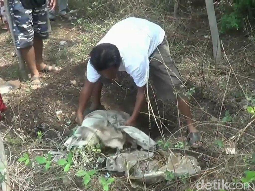 Kawanan Anjing Liar Meneror, Begini Keresahan Warga Probolinggo