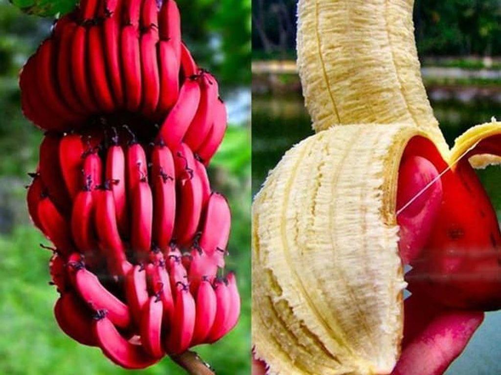5 Buah Langka! Ada Kiwi hingga Pisang yang Warnanya Merah