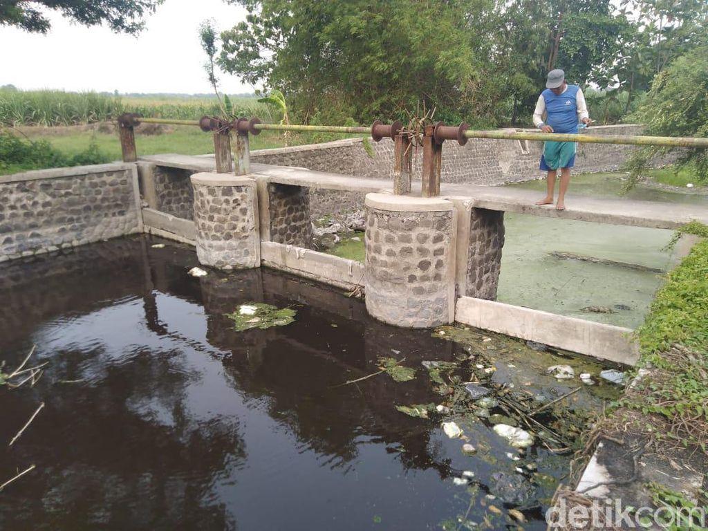 Pabrik Kertas di Jombang Dinyatakan Biang Pencemaran Sungai Avur Budug