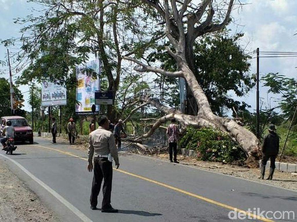 Sebuah Pohon Tumbang Srempet Nenek-nenek di Tulungagung