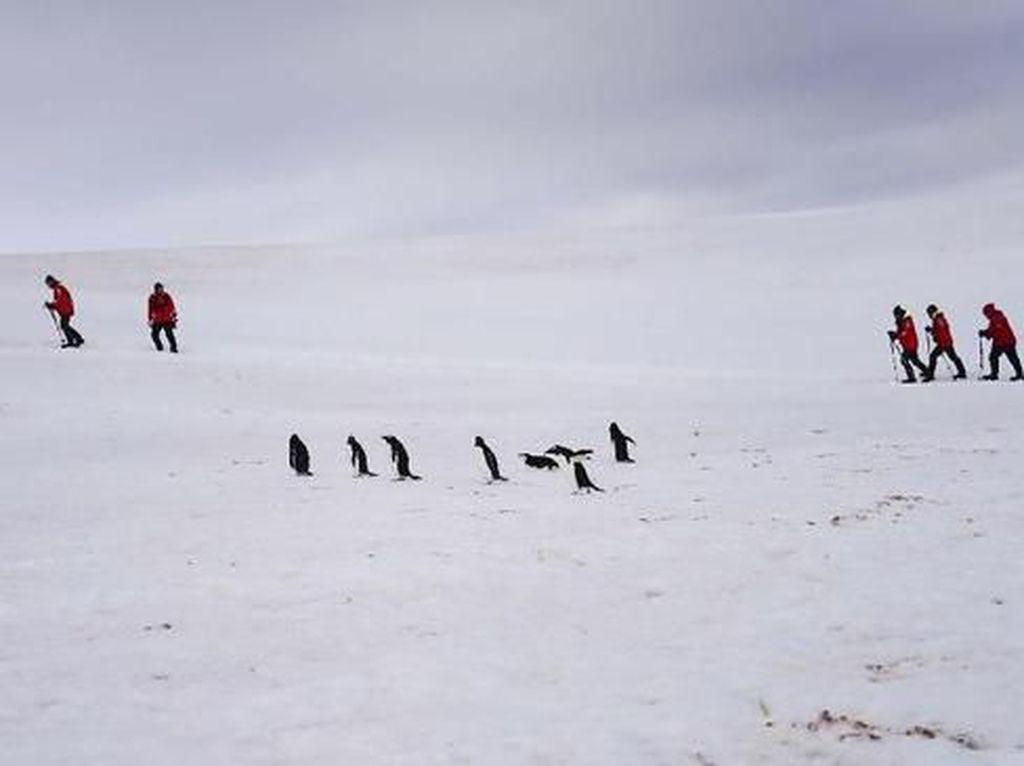 Foto: Es Antartika Meleleh tapi Makin Ramai Turis