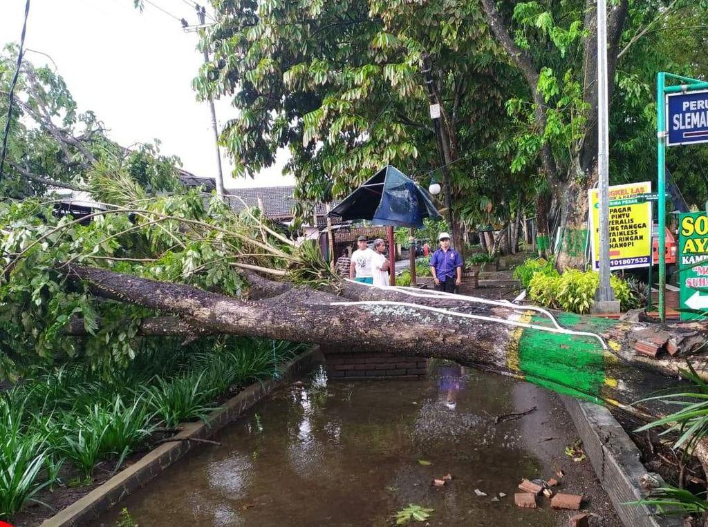 Belasan Pohon Tumbang di Sleman: Timpa Rumah dan Tutup Jalan