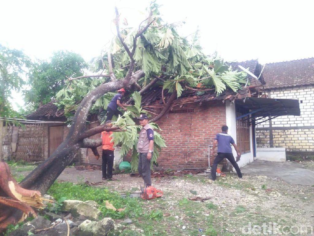 Angin Kencang di Lamongan Tumbangkan Pohon dan Rusak Belasan Rumah