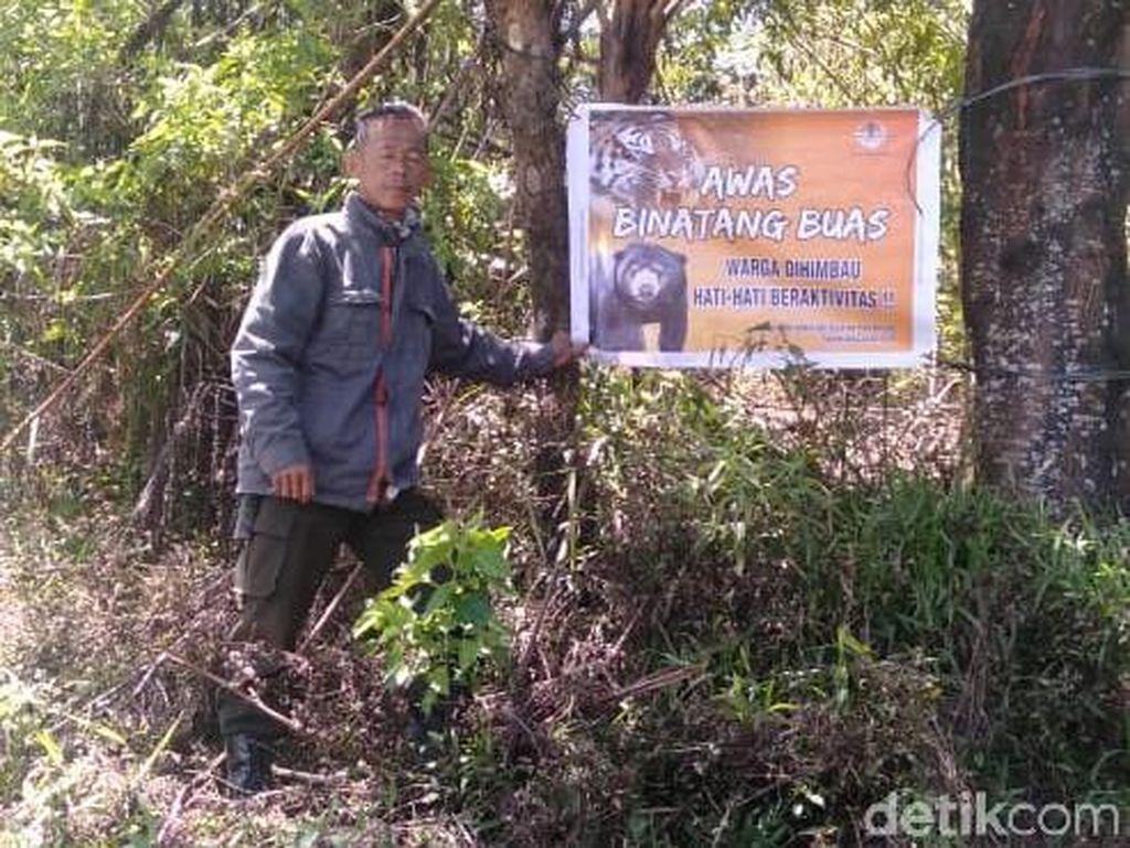 BKSDA Sebut Harimau Sudah Jauhi Pagaralam, Imbau Wisawatan Tak Perlu Panik