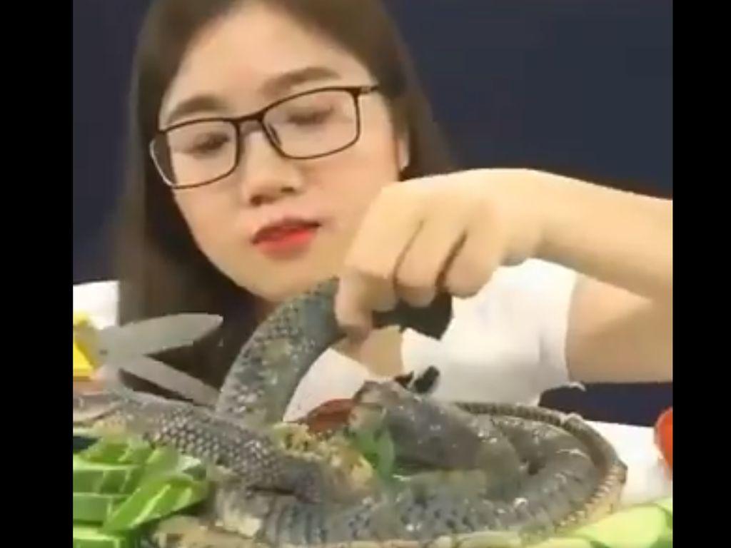 RI Masih Impor Ular hingga Kura-kura dari China?