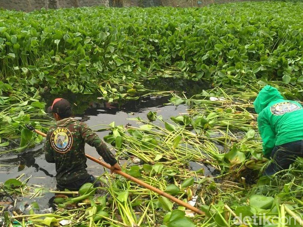 Cegah Banjir, BPBD Sapu Bersih Eceng Gondok di Sungai Cipager