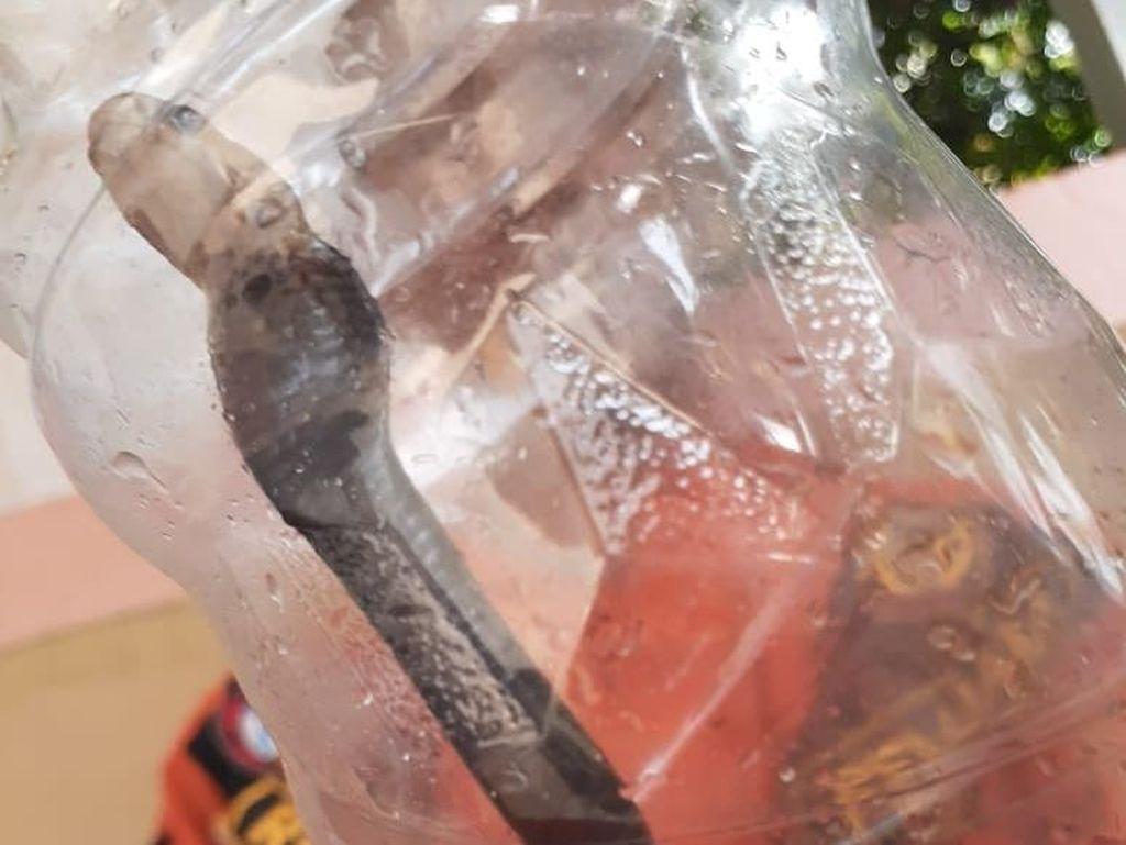 Kobra di Perumahan Citayam, Camat Bojonggede Duga Habitat Ular Terganggu