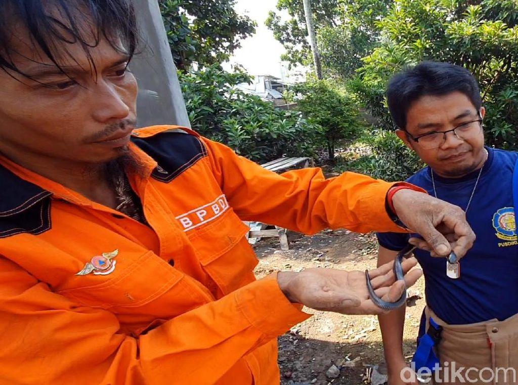 Belasan Ular Teror Sukabumi, Ada yang Sembunyi di Jok Motor