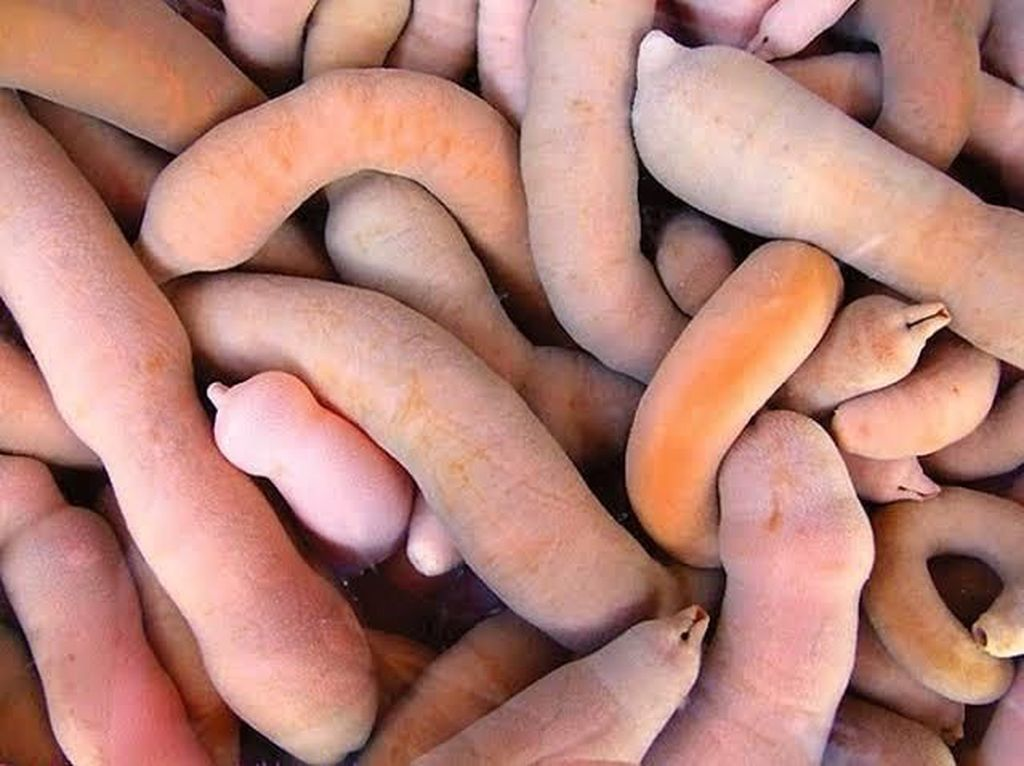 Ikan Penis Bikin Geger hingga Trik Ade Rai Makan Nasi Padang