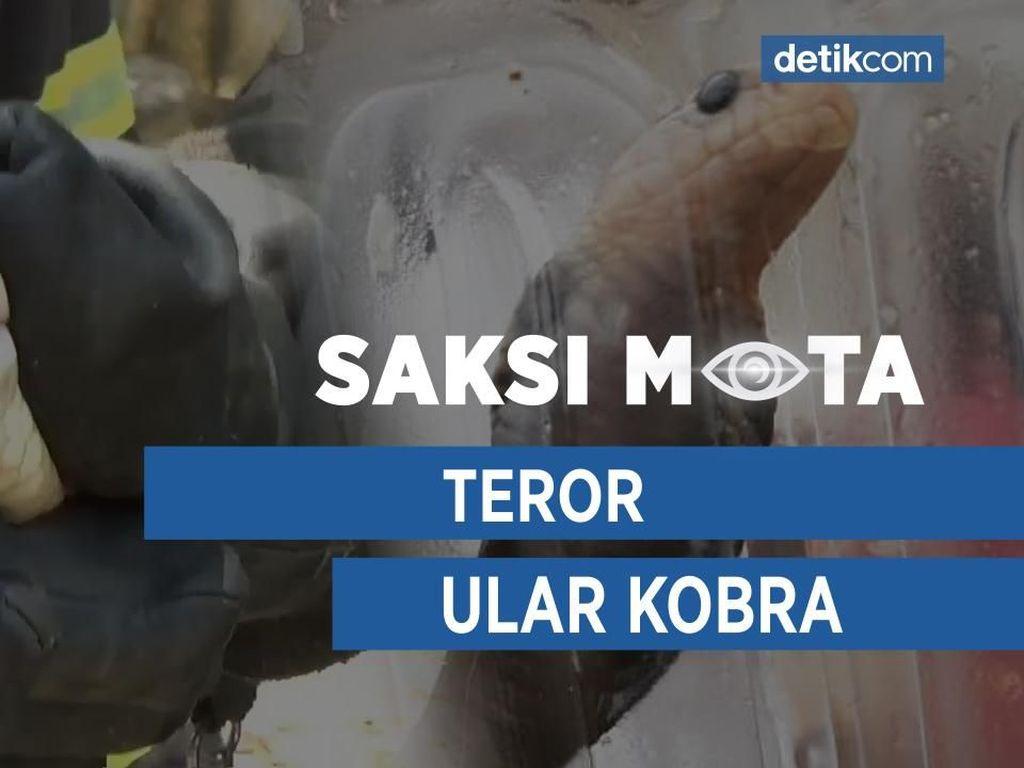 Saksi Mata: Teror Ular Kobra