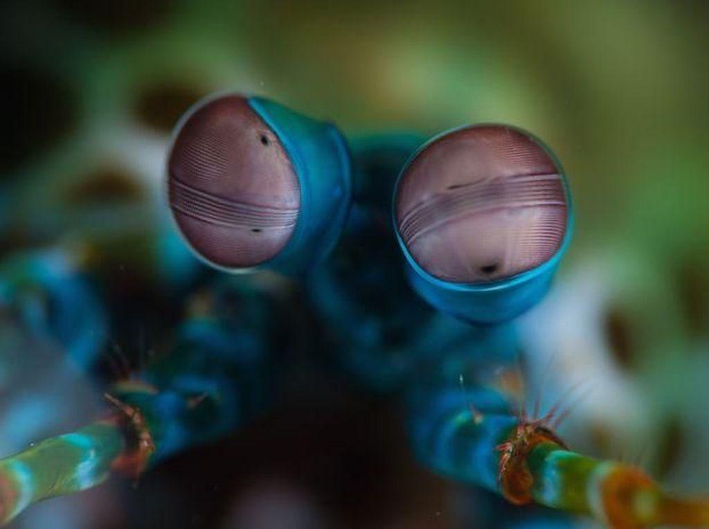 Menakjubkan! Mata Makhluk Hidup Dilihat dari Dekat