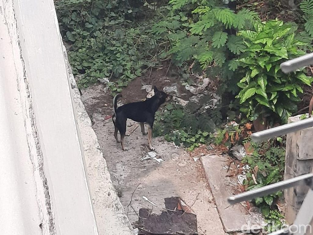 Anjing Telantar dan Terkurung di Kemayoran Jakarta Pusat
