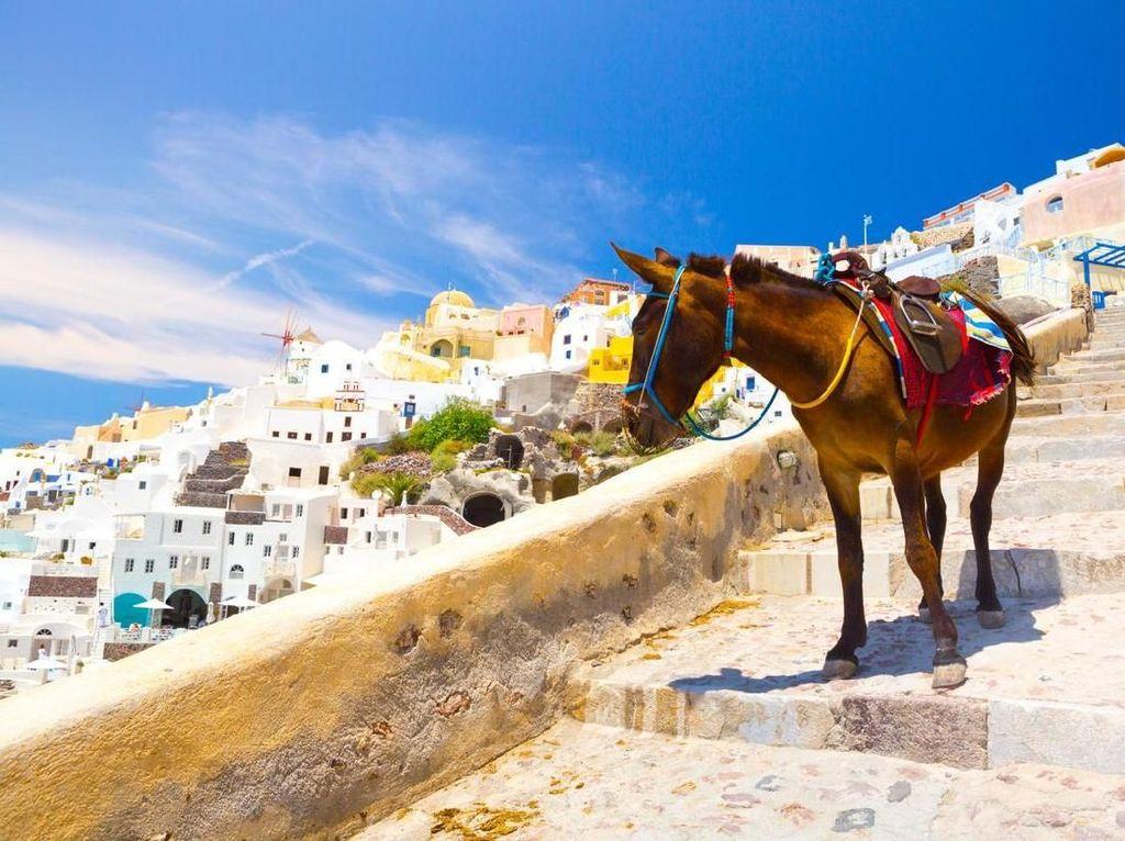 Denda Rp 400-an Juta buat Turis Gemuk yang Naik Keledai Santorini
