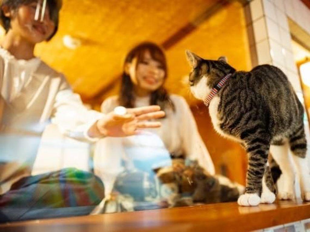 Foto: Hotel Kapsul Unik, Menginap Bareng Kucing
