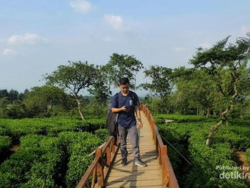 Pemandangan Luas nan Sejuk Ini Tak Jauh dari Surabaya