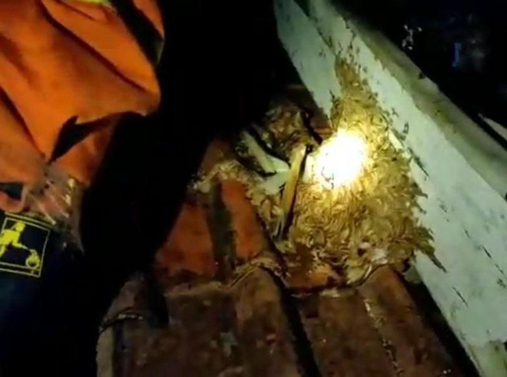 Kakek Sutarma Tewas Usai Diserang Tawon Vespa, Ada 50 Luka Sengat di Tubuhnya
