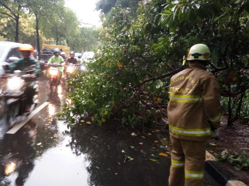 Pohon Tumbang di Jalur Menuju Bandara Halim, Damkar Turun Tangan