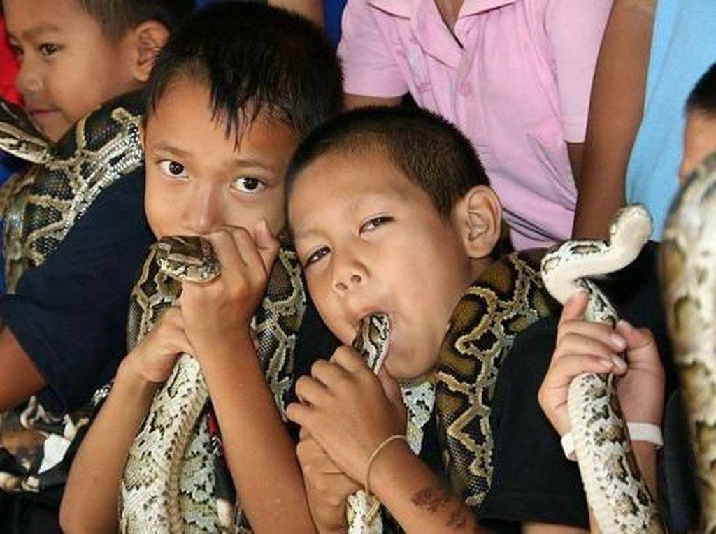 Lagi Ramai Ular Kobra, Kalau Ini Beneran Desa Kobra