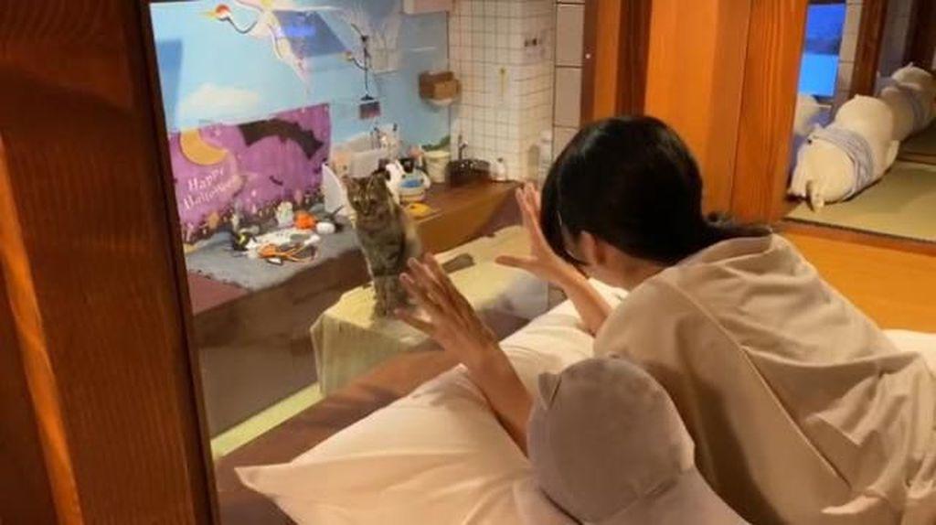 Foto: Gemesin! Nginap Bareng Kucing di Hotel Kapsul