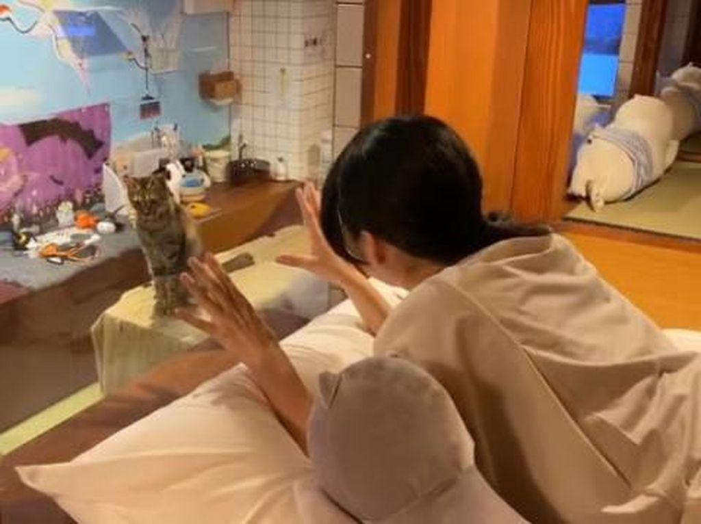 Susah Tidur? Coba Terapi Tidur Bareng Kucing Gemas di Hotel Ini
