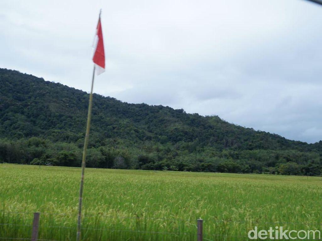 Gurihnya Beras Krayan di Perbatasan RI yang Diekspor ke Malaysia