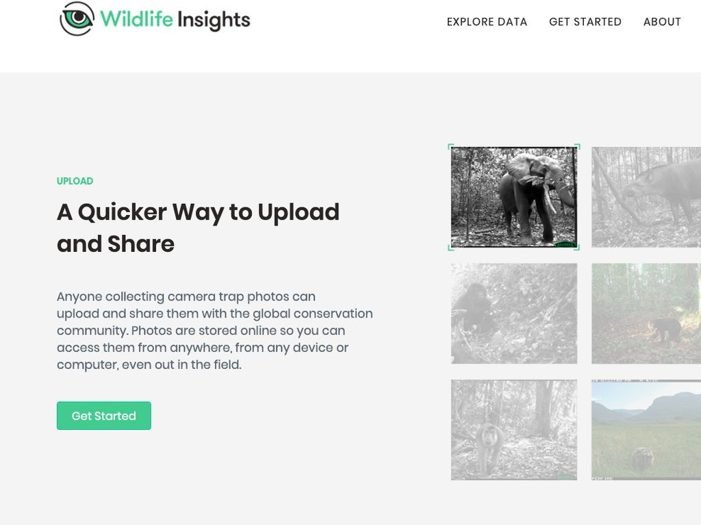 Mau Lihat Hewan Langka Indonesia? Wildlife Insights Kasih Gambarnya
