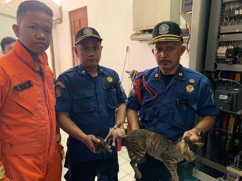 Damkar Evakuasi Kucing Masuk Panel Listrik di Rumah Dinas Gubernur Anies