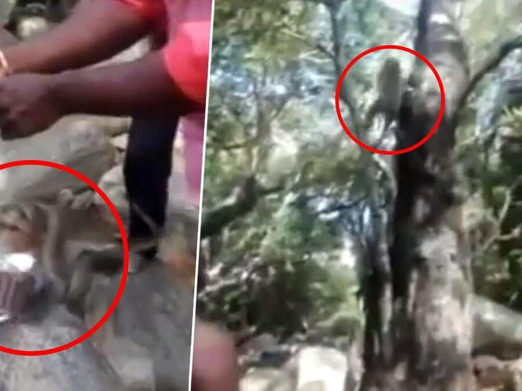 Kocak! Rayakan Ulang Tahun di Hutan, Kue Pria Ini Malah Dicuri Monyet