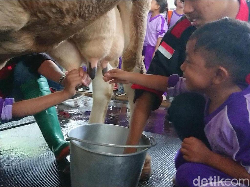 Liburan Akhir Tahun ke Kampung Susu Tulungagung Yuk