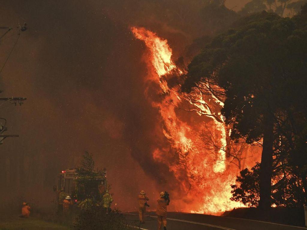 Tragis! 2 Petugas Tewas Saat Padamkan Kebakaran Hutan Australia