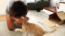 Kenalkan MarsCat, Robot Kucing yang Bikin Gemas