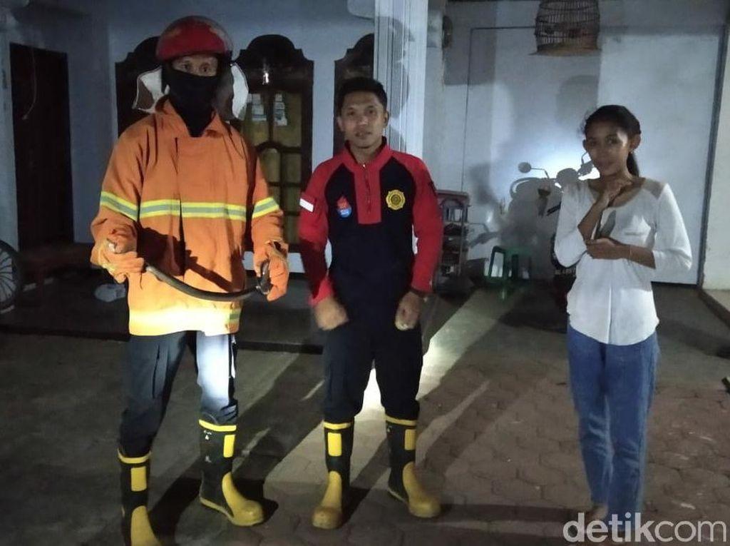 Sepekan, Damkar Trenggalek Evakuasi Tiga Cobra dan Dua Sarang Tawon